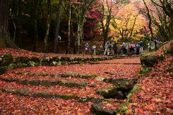 舞い落ちた葉は、まるで真っ赤な絨毯
