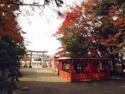 """紅葉も見頃 日本の""""気″の中心、賀茂神社"""