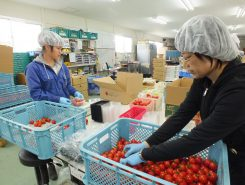 年間120トンのトマトを出荷