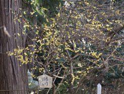 そっと黄色い花が咲く