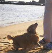 パパと海辺で遊ぶ🎵 嬉しくて仕方ないイブ⤴️