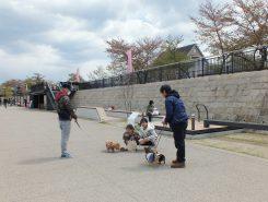 犬の散歩に訪れる人も多い