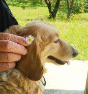 清々しい晴天💙 公園でのpicです♪お花が似合う?