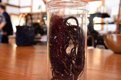 紫根は日本薬局方にも登録されている