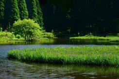 平池は、ビラデスト今津から徒歩約15分