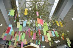 信楽駅には大きな笹に短冊が飾られている