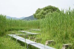 西の湖園地の遊歩道