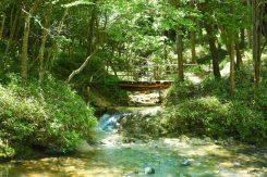 合流する小さな川