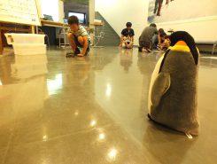 ペンギンに会いに行くプログラミング