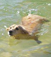 生まれて初めての泳ぎ♪教えなくても上手!