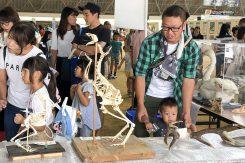 動物の骨格展示に興味津々