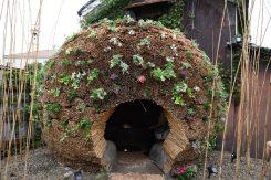 葦を使ったドーム。全体を覆う植物が育ち、会期中も変化し続ける