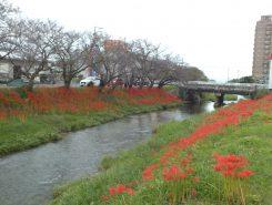 琵琶湖大橋の近くを流れる真野川