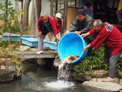 大きな鯉を放流する小椋市長