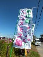この旗が目印。第二コスモス園の前が駐車場