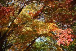 紅葉を眺めながら登山道を進む