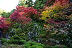 彩られた名勝庭園