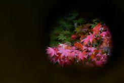 灯ろうから見えた紅葉