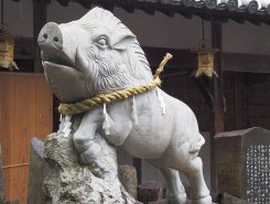 猪が蒲生の豪族を綿向山の大神の所まで導いたという伝説が伝わる
