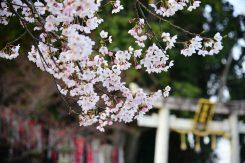 渡合橋近くの百々神社