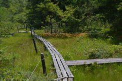 整備された木道