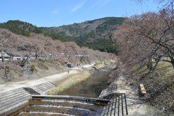 千本桜の名所として知られている