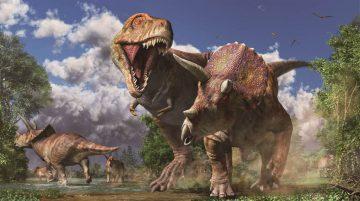 ③トリケラトプスを襲うティラノサウルス(復元画:月本佳代美)
