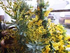 ミモザのつぼみや花を織り交ぜて、黄色のコントラストが美しいリースに仕上げる