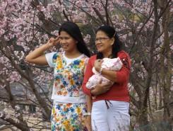 日本の春を楽しむ