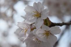 時折舞い散る花びらにも風情がある