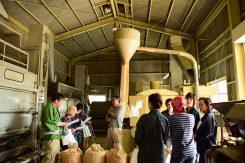 製茶工場には、新芽の良い香りが広がっていた