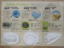 「化石のレプリカ作り」参加者受付中