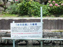 水質浄化のためにイケチョウ貝が育てられているそう。なんとイケチョウ貝には1日に200Lもの水を浄化する力があるんだって!!