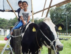 最後は牛の背中に乗せてもらってハイポーズ!すっかり牛と仲良くなったね♪