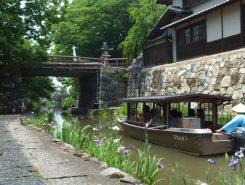近江八幡の観光名所、八幡堀をハナショウブが彩っている