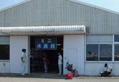 ミニ水族館には琵琶湖の魚を展示