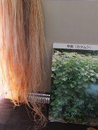 「からむし(苧麻)」や「大麻」の茎から繊維をとって乾燥させたもの