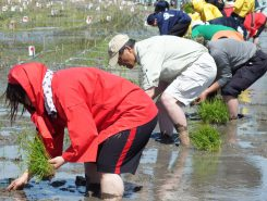 ひざ下まで泥につかって…