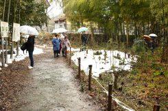 小雨の中、多くの人が鑑賞に訪れた