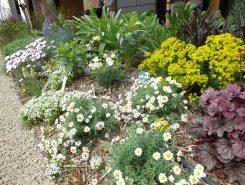 春の草花がきれい