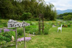 河川敷の一部には花が植えられている