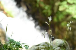 岩の間に咲く可憐な花