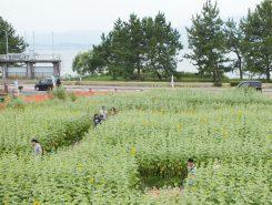 琵琶湖も良く見える