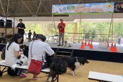 ステージでは盲導犬の紹介も
