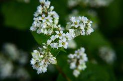 6~7ミリの小さな花