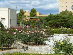 色とりどりのバラが咲いている
