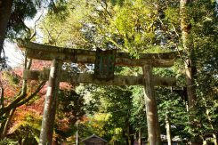 水利を司る神として崇敬される大瀧神社