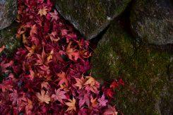 落ち葉までも美しい