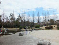 じゃぶじゃぶ池の横には早咲きの桜が