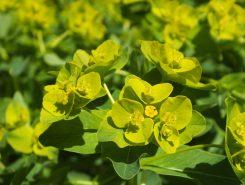葉の上に黄色い花が咲く